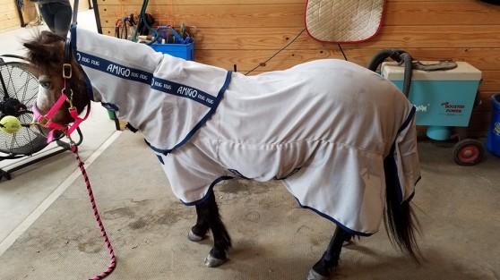 Rocky-BayPoint Equestrian